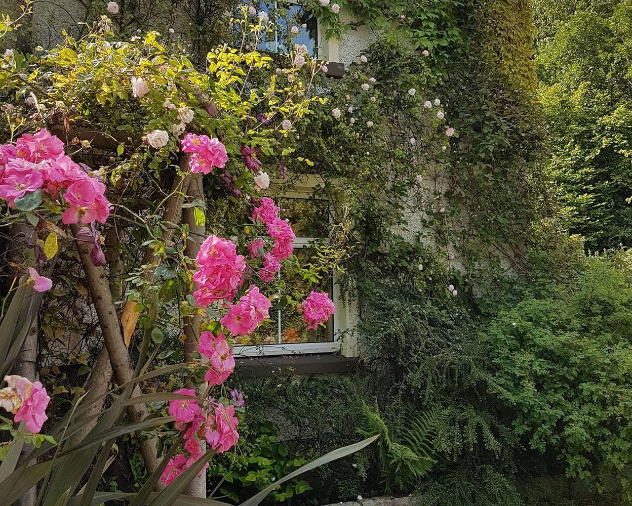 Knockrose | Gardens of Ireland Trust