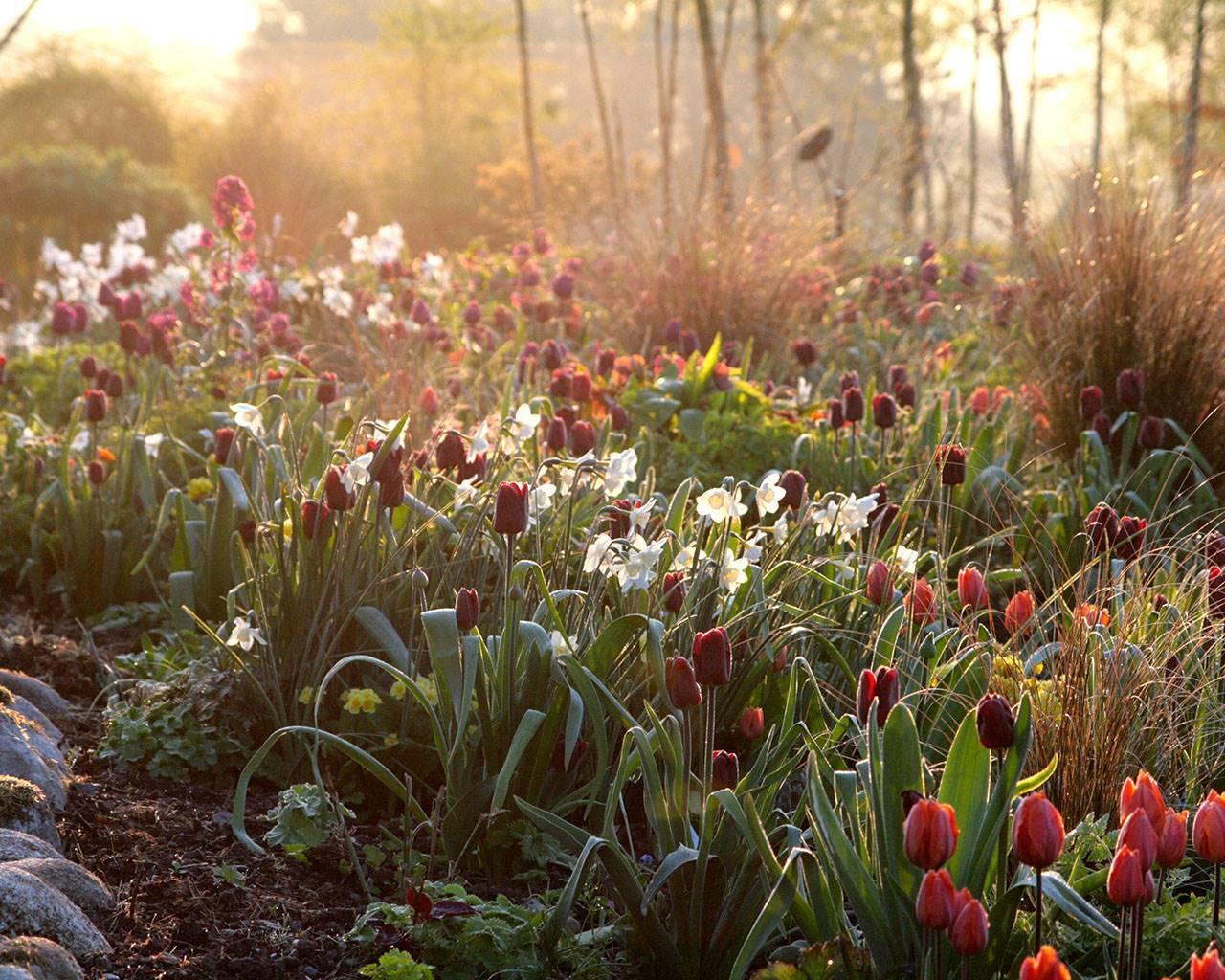 Hunting Brook Gardens | Gardens of Ireland Trust